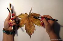 Paper /Autumn Leaves
