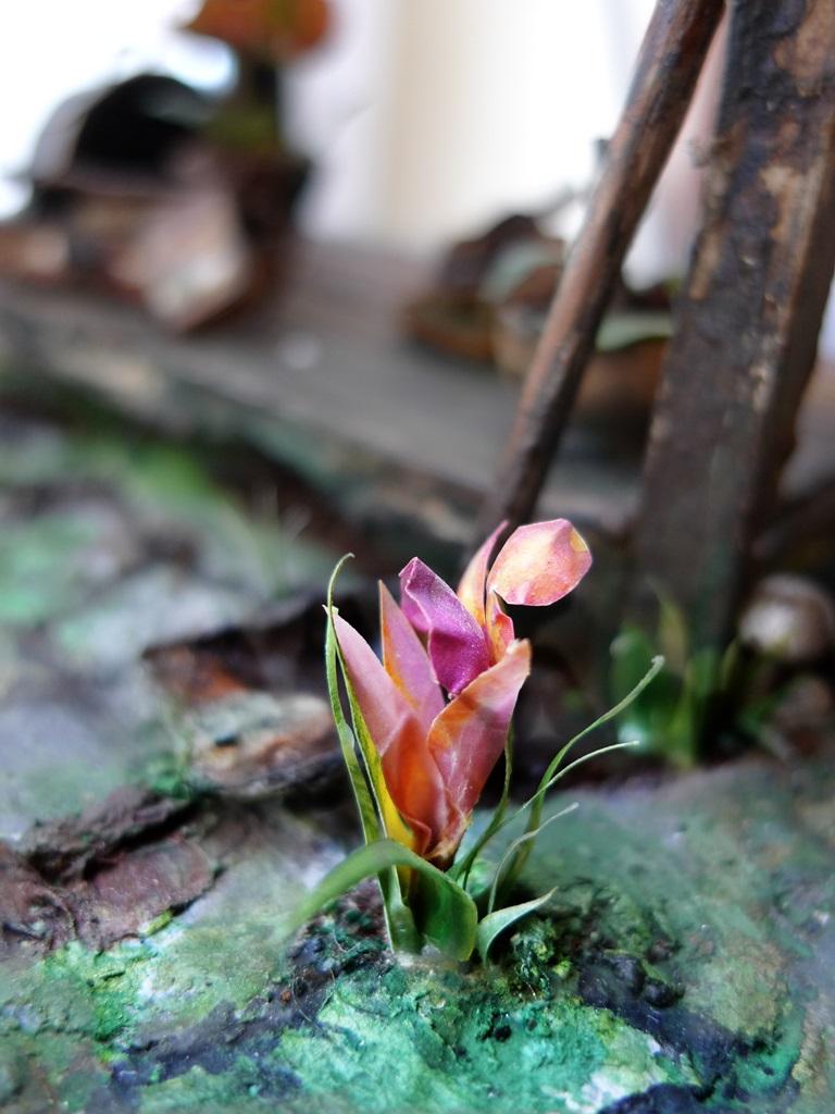 garden (16)